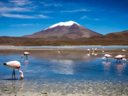 Mägimatk Boliivias